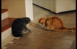 kočky a cvrček