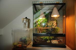 Tarárium chameleona