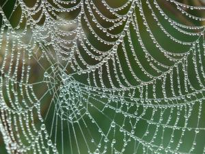 pavoučí síť